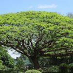 偏差値70を突破できる生徒の親御様の秘訣(3)ひょろひょろの根・良樹細根・大樹深根